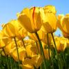 amarillo, color de la endometriosis